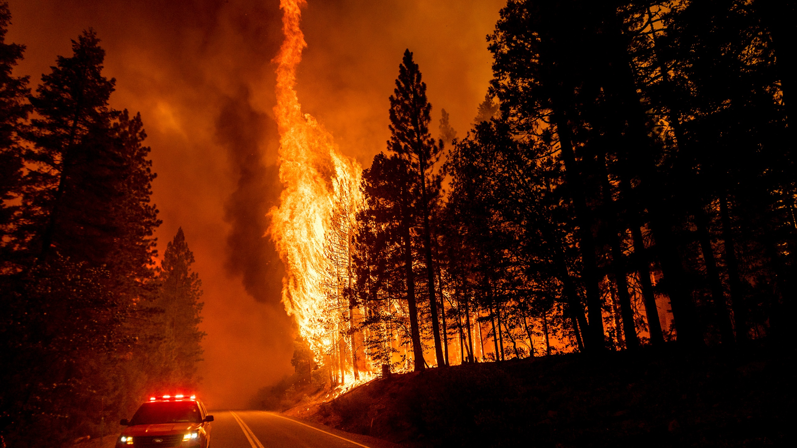 In this Aug. 3, 2021, file photo, flames leap from trees as the Dixie Fire jumps Highway 89 north of Greenville in Plumas County, Calif. Each year thousands of acres of dense timber are thinned near remote communities, all designed to slow the spread of massive wildfires. While most scientific studies find such forest management is a valuable tool, environmental advocates say data from recent gigantic wildfires support their long-running assertion that efforts to slow wildfires have instead accelerated their spread. (AP Photo/Noah Berger, File)