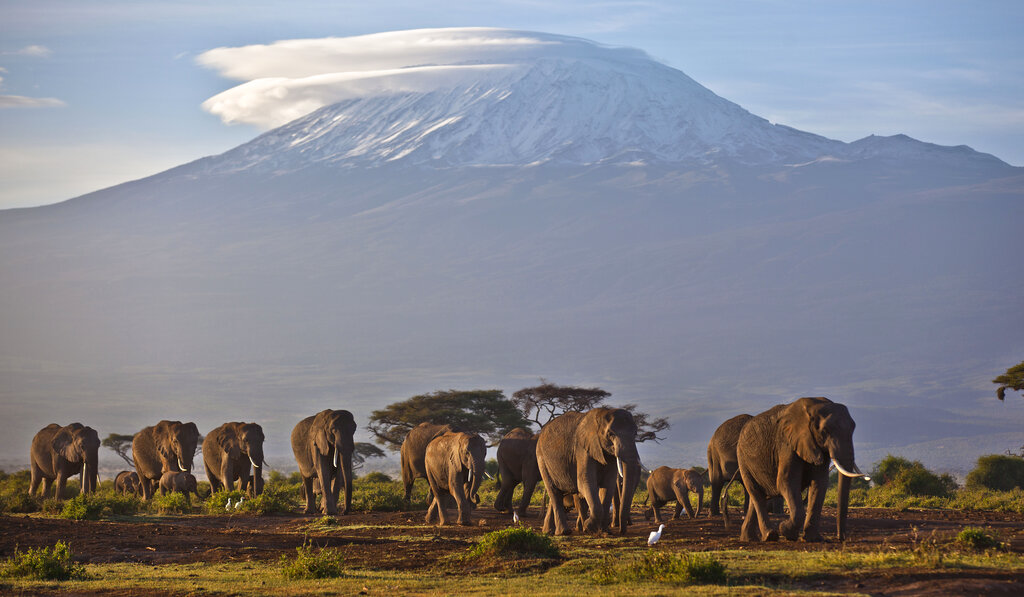 In this Monday, Dec. 17, 2012 file photo, a herd of adult and baby elephants walks in the dawn light as the highest mountain in Africa, Mount Kilimanjaro in Tanzania, sits topped with snow in the background, seen from Amboseli National Park in southern Kenya. (AP Photo/Ben Curtis, File)