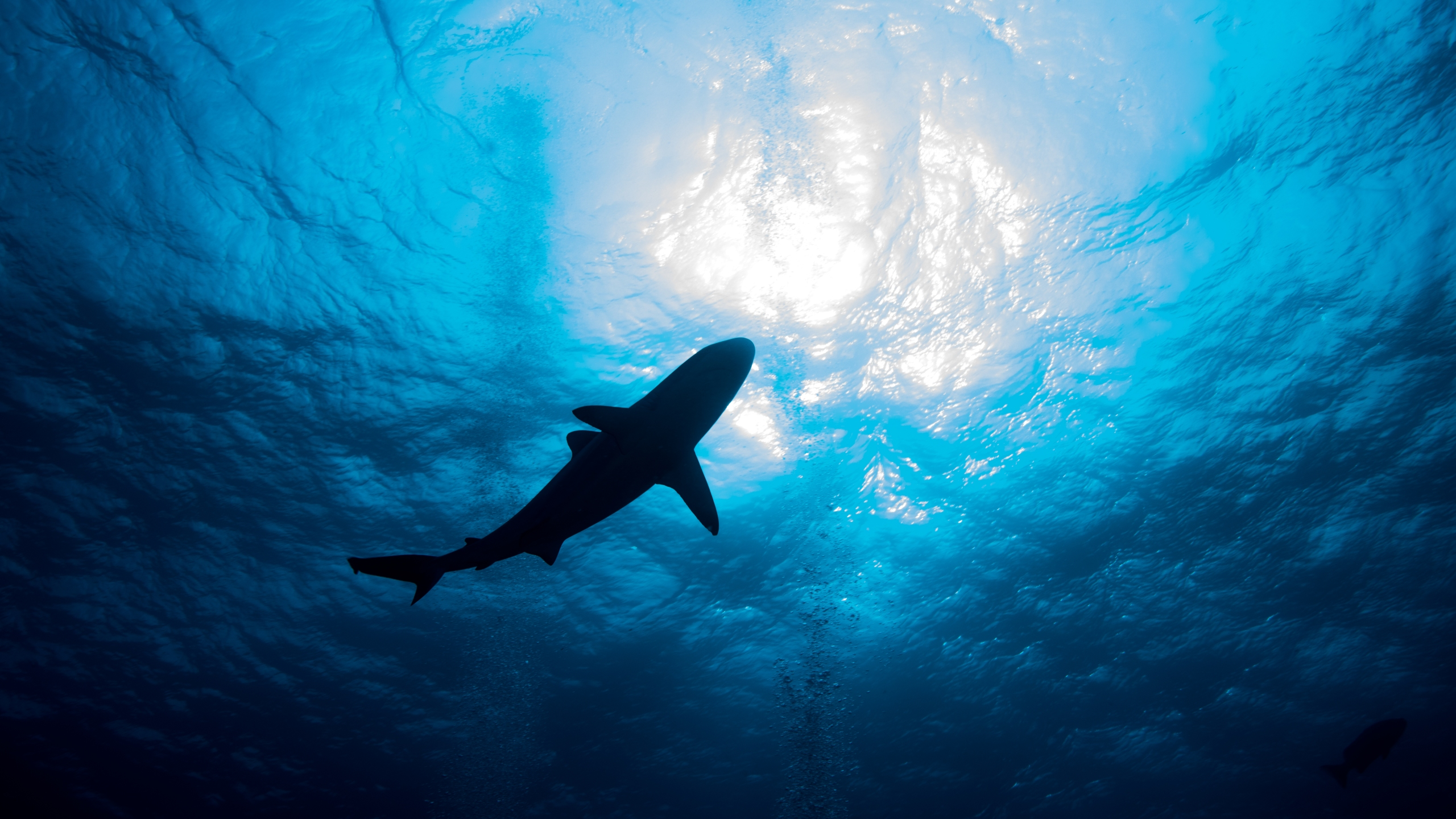 A shark is seen in this undated file photo. (Getty Images)
