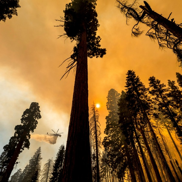 In this Sept. 19, 2021, file photo, a helicopter drops water on the Windy Fire burning in the Trail of 100 Giants grove of Sequoia National Forest, Calif. The California highway connecting visitors to the world's two largest sequoia trees remains closed so crews can remove as many as 10,000 trees weakened by wildfires, drought, disease or age. (AP Photo/Noah Berger)