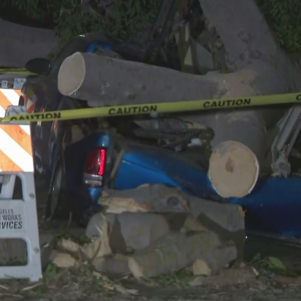Winds toppled onto four vehicles in the Harvard Park neighborhood after gusty winds hit the region on Oct. 11, 2021. (KTLA)