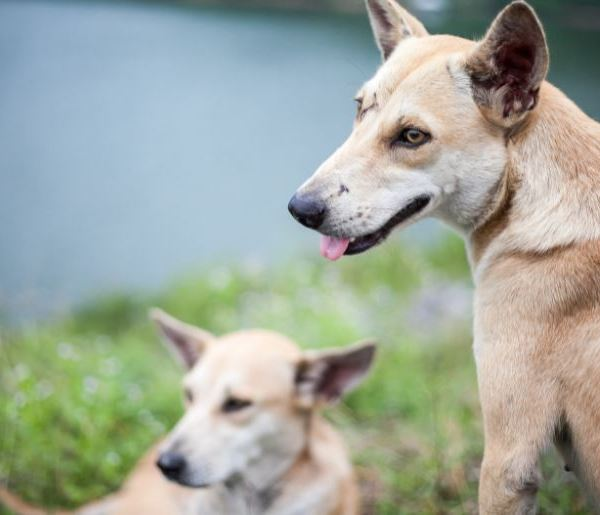 The West Valley Animal Shelter in Chatsworth shared an undated photo of two dogs on Oct. 15, 2021.